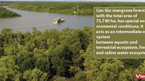 Can Gio biosphere reserve