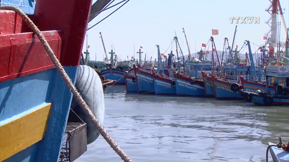 Binh Dinh acts tough on fishing violations