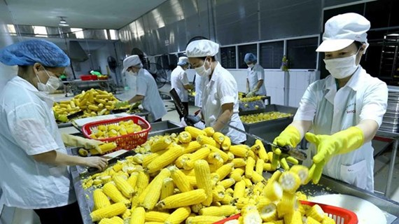 RCEP helps Vietnamese agricultural products reach out to the world