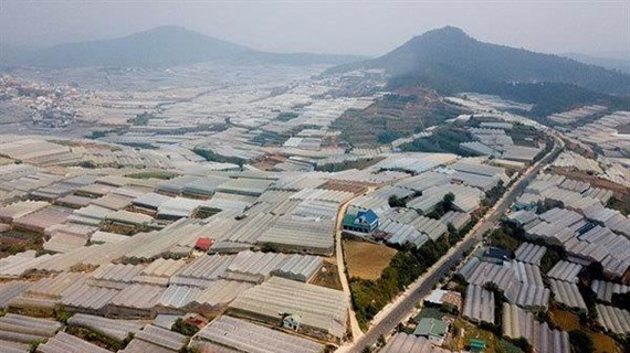 Greenhouse expansion damages Da Lat's environment