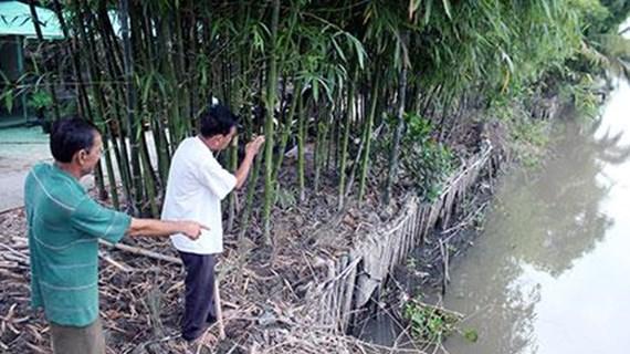 Hau Giang resorts to earthen embankments to prevent erosion