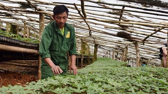 Kon Tum focuses on agricultural development