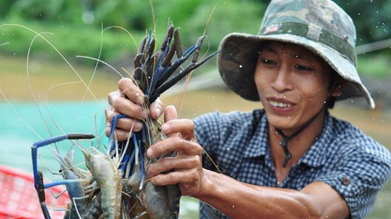 Kien Giang aims to raise value of key farming products