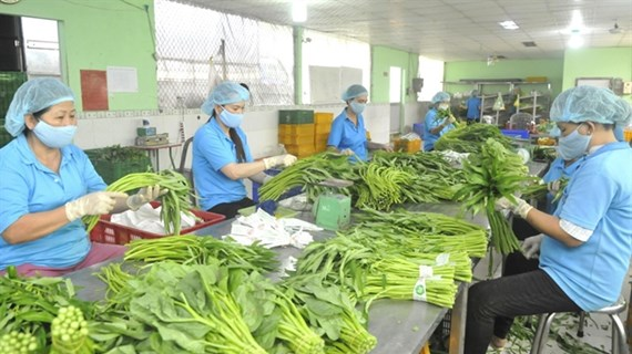 Fruit, vegetable exports expected to revive after nine-month slump