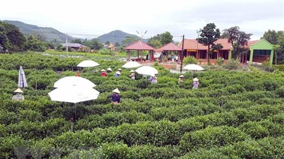 Thai Nguyen hi-tech agricultural zone set up