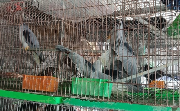 WWF calls for permanent shutdown of wildlife markets over COVID-19 concerns hinh anh 1