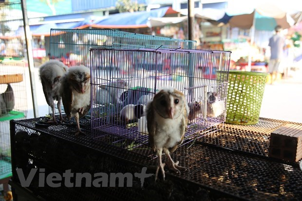 Forest protection forces crack down on country's largest wildlife market hinh anh 1