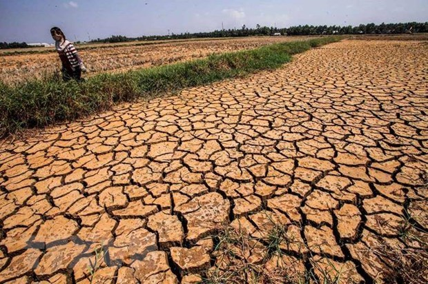 Utmost efforts needed to help Mekong Delta overcome drought hinh anh 2