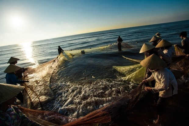 Fisheries sector striving to secure sustainable, responsible development hinh anh 1