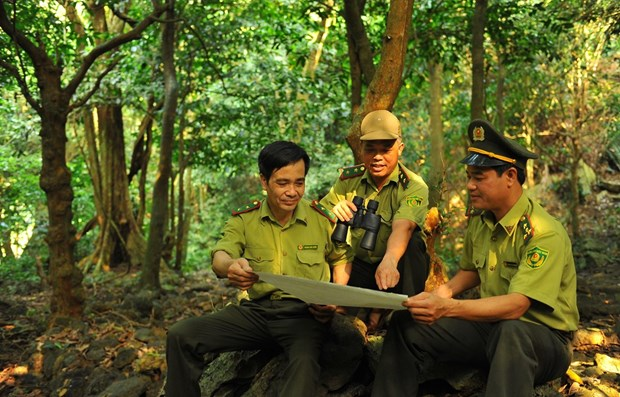 'Forest school' helps spread love for nature hinh anh 1
