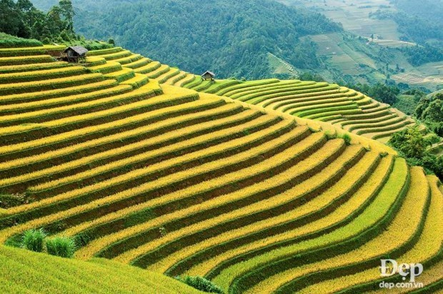 Must-visit spots in Mu Cang Chai hinh anh 4