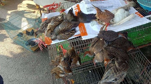 Wildlife conservation organisations call for end to wild birds trade hinh anh 2