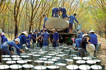 Oversupply likely to plague Vietnam's rubber industry hinh anh 1