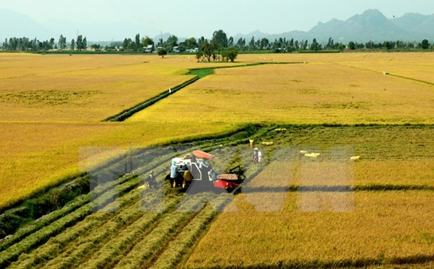 An Giang spends big on restructuring agricultural sector hinh anh 1