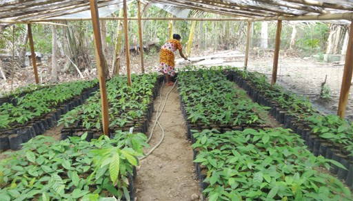 Singapore, Indonesia boost agricultural cooperation hinh anh 1