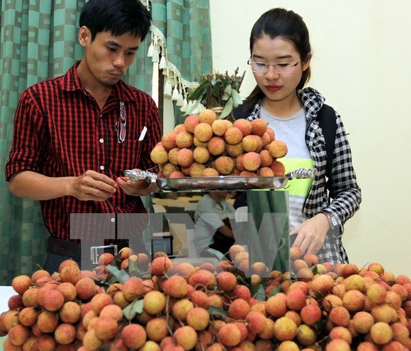 Bac Giang earns trillions of dong from lychee hinh anh 1