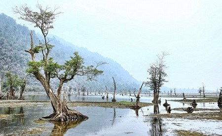 Morning dew, floating trees instil a sense of calm at Noong Lake hinh anh 1