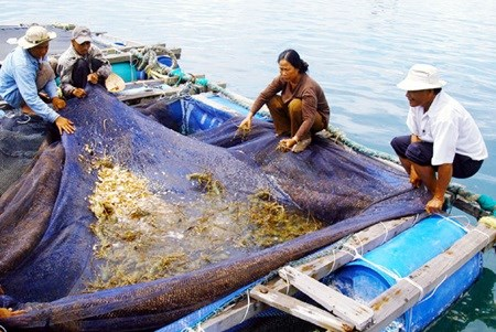 Seminar highlights sustainable lobster farming hinh anh 1