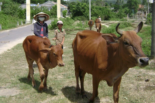 Phu Yen strives to reduce poverty sustainably hinh anh 1