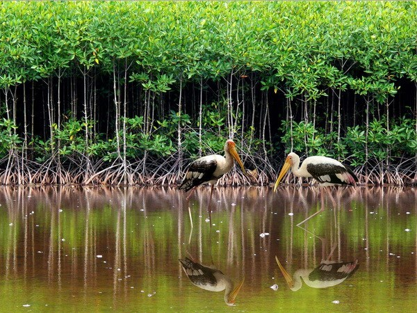 Vietnam focuses on coastal eco-system, mangrove forest protection hinh anh 1