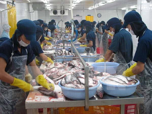 Tra fish sector needs strong brand name hinh anh 1
