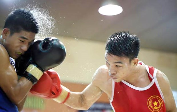 Vietnam earn berths at continental boxing champs hinh anh 1
