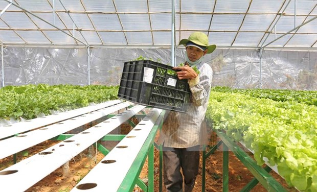 Japanese firm to develop organic vegetable project in Ha Nam hinh anh 1