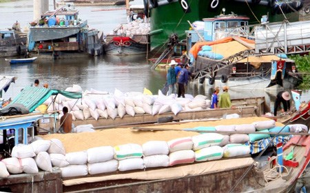 Rice exports continue to decline hinh anh 1
