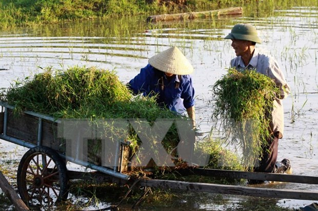 Agricultural insurance supports farmers in distress hinh anh 1