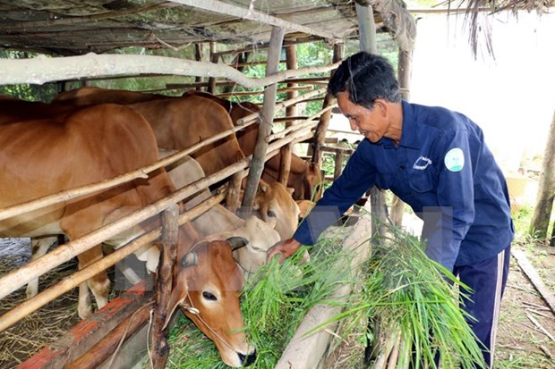 Vietnam strives to implement sustainable poverty reduction solutions hinh anh 1