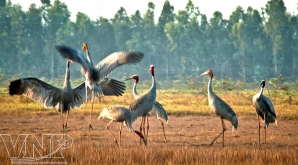 Bird sanctuary in Mekong Delta recognised as national heritage site hinh anh 1