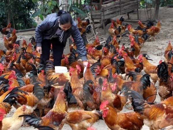 Vietnam alarmed at A/H7N9 influenza threat hinh anh 1