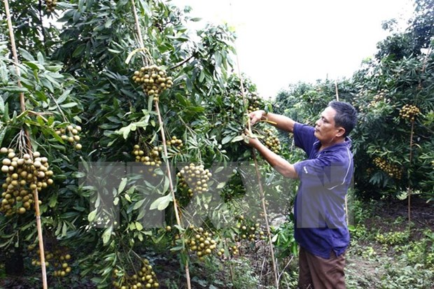 Japanese firms seek to adopt IT in agriculture in Ha Nam hinh anh 1