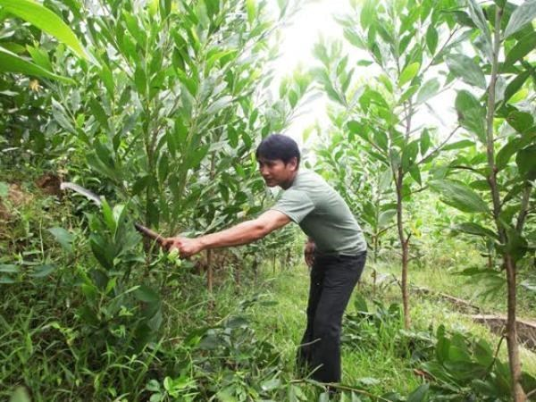 Preferential interest comes to forest planters and farmers hinh anh 1