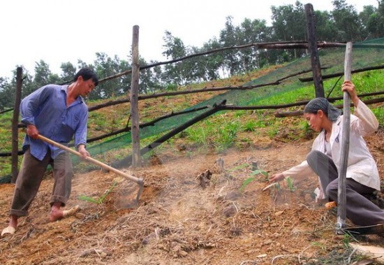 Measures to reduce land erosion in Dak Lak province hinh anh 1