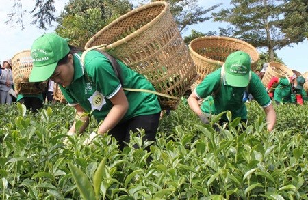 Lam Dong province seeks market for tea hinh anh 1