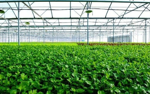 First farm in Vietnam receives US, EU organic certification hinh anh 1