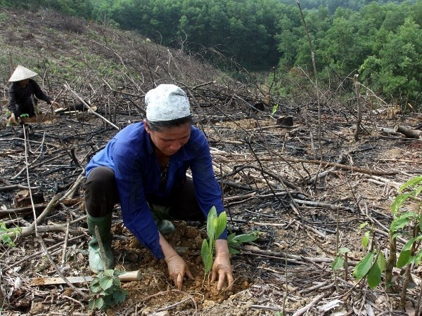 Ethnic minorities join hands to address climate change hinh anh 1