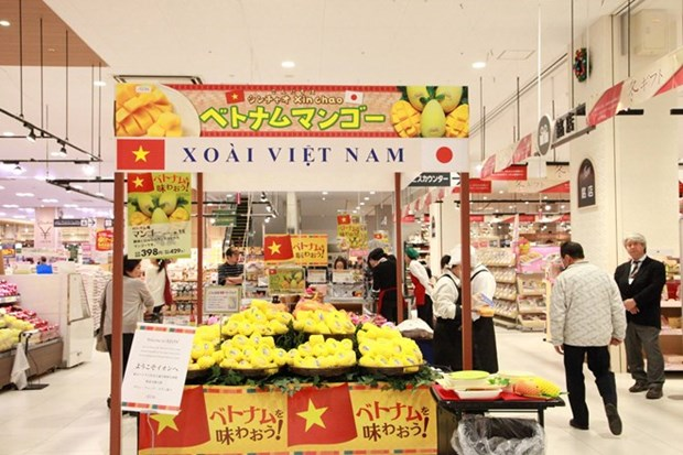 First Cat Chu mangoes hit shelves in Japan hinh anh 1