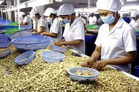 HCM City to hold international cashew conference hinh anh 1