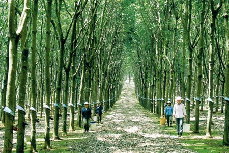 Vietnam, Japan produce carbon-free rubber hinh anh 1
