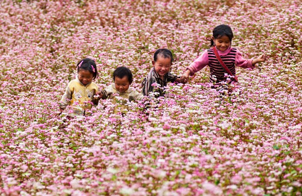 Ha Giang promotes buckwheat flower fest in Hanoi hinh anh 1
