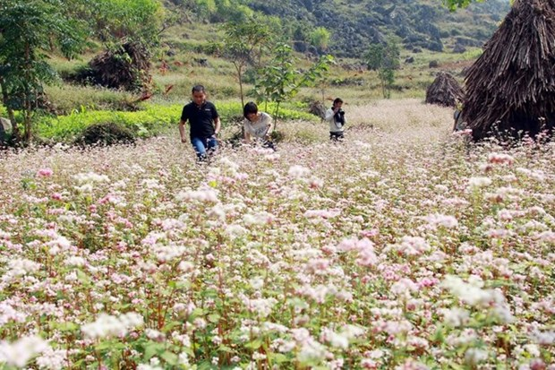 First buckwheat festival opens in Ha Giang hinh anh 1