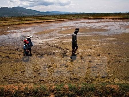 Mekong delta faces water shortage, saline intrusion hinh anh 1