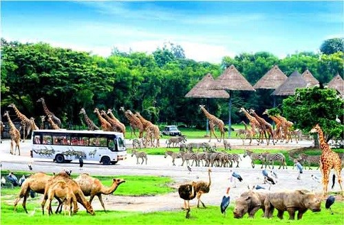 Phu Quoc to have first wild animal conservation park hinh anh 1