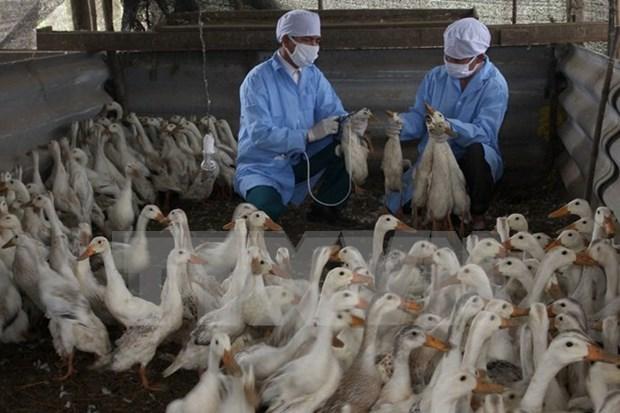 Health sector warns of renewed bird flu threat hinh anh 1