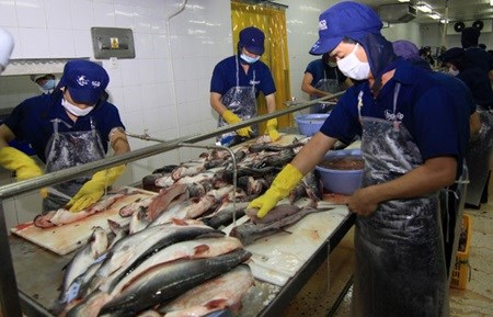 Tra fish industry needs makeover hinh anh 1