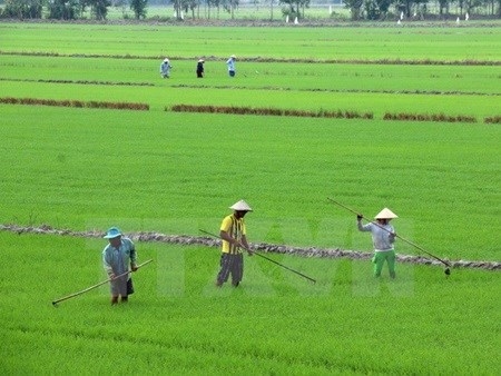 Better Rice initiative to help Mekong farmers hinh anh 1