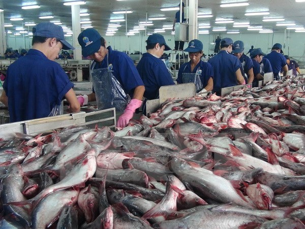 Tra fish export to China enjoys strong growth hinh anh 1