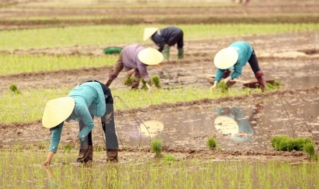 Canada doles out 12.9 million USD for Vietnam's agriculture hinh anh 1
